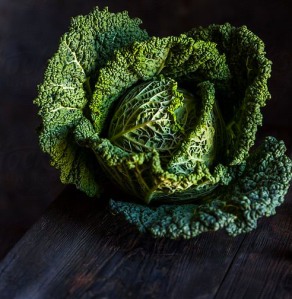 Savoy Cabbage beautiful photography